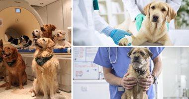 الزراعة: تحصين 1848 كلبا من خلال مديريات الطب البيطرى خلال 30 يوما