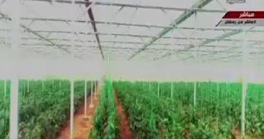 فيديو.. نقيب الزراعيين: استقرار أسعار الفواكه والخضروات بفضل مشروع الصوب الزراعية