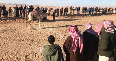 الاتحاد المصرى للهجن ينظم 3 مهرجانات دولية لسباقات الهجن فى 3 محافظات من بينها محافظة الإسماعيلية