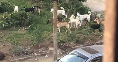 """سكان زهراء مدينة نصر يستغيثون: """"الكلاب الضالة توحشت ونعانى أشد المعاناة"""""""