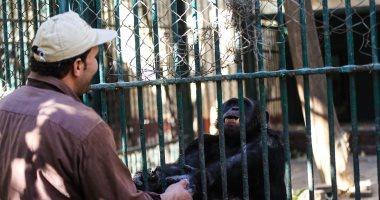 """بيت الشمبانزى يجذب زوار حديقة الحيوان و""""لوزة"""" تواجه برودة الجو بـ""""الشاى"""""""