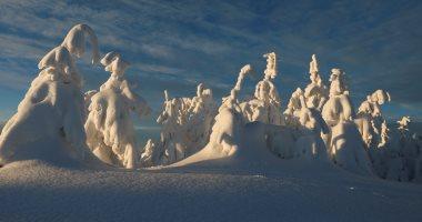 الثلوج ترسم لوحات فنية على أشجار بولندا