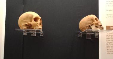 معرض يضم 15 جمجمة جديدة بالمتحف المصرى قبل افتتاحه × 10 صورة
