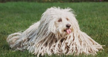 مارك زوكربيرج يهنئ كلبه بعيد ميلاده.. اعرف نوعه وعدد متابعيه على فيس بوك