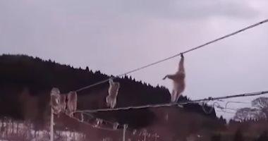 شاهد.. قردة تتسلق أسلاكا كهربائية تجنبا للمشى على الثلج فى اليابان
