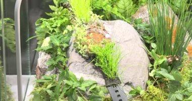 شاهد.. ساعة نباتية لتصوير هشاشة الطبيعة