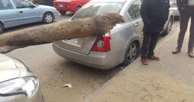 صور.. عاصفة ترابية بالإسماعيلية وسقوط أشجار على سيارات بحى أول