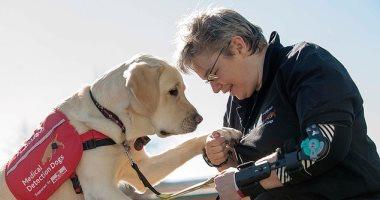 كلاب مدربة تساعد مرضى السكر على اكتشاف انخفاضه فى الدم.. اعرف التفاصيل