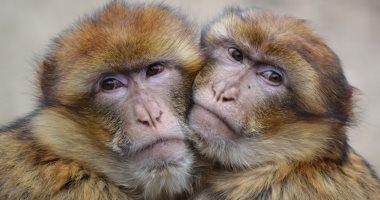 ليس حكرا على الإنسان.. الحيوانات بتعرف تحضن كمان.. صور