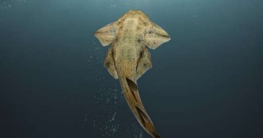 صور.. رصد سمك قرش نادر بالقرب من ساحل ويلز البريطانى