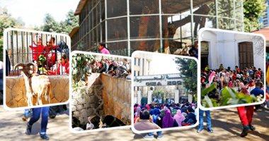 128 عاما على افتتاح حديقة الحيوان.. هنفكرك بفُسحة الطفولة المفضلة ..فيديو وصور