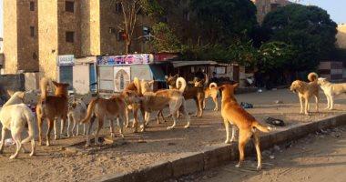 صور.. الكلاب الضالة تنتشر بشوارع الإسماعيلية.. والطب البيطرى تكثف الحملات