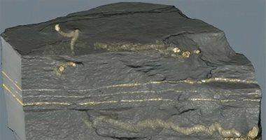 العثور على مخلوق بدائى.. عاش قبل 2 مليار سنة.. اعرف التفاصيل