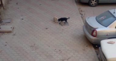 قارئ يشكو انتشار الكلاب الضالة بالحى الأول بمدينة العبور
