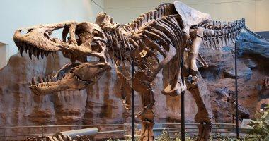 الصين: اكتشاف آثار أقدام ديناصورات تعود إلى 100 مليون عام