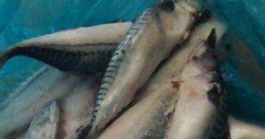 صور .. ضبط 15 طن لحوم وأسماك غير صالحة فى 19 محافظة خلال أسبوعين