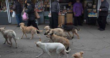 شكوى من استمرار أزمة الكلاب الضالة بشارع طلعت حرب فى الجيزة