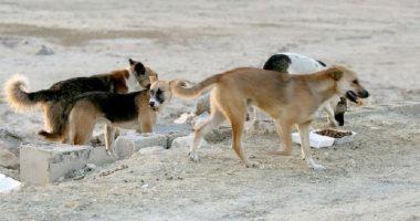 شكوى من انتشار الكلاب الضالة بالحى 11 بأكتوبر
