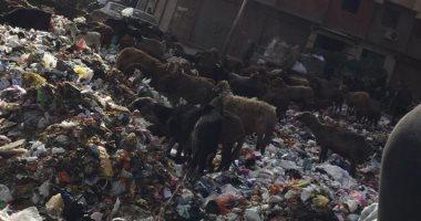 قارئ يشكو من انتشار القمامة والأوبئة فى عزبة النخل