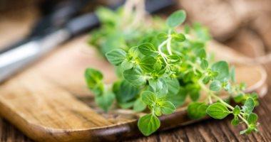 """""""الزراعة"""" تحدد 6 توصيات لمحصول النبات الطبية لزيادة الإنتاج ..تعرف عليها"""