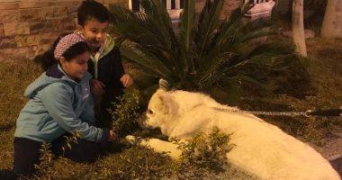 أنا وأليفى.. قارئ يشارك صور أولادة مع كلبهم ويقول: يعلمهم الرحمة والرفق بالحيوانات
