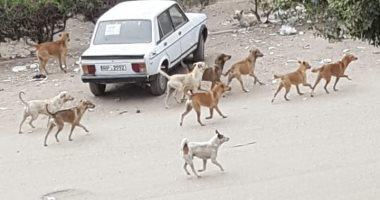 شكوى من انتشار الكلاب الضالة بالمشروع السويسرى بمدينة نصر