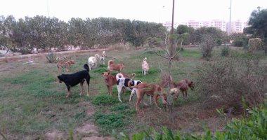 قارئ يشكو من انتشار الكلاب الضالة بمنطقة أبو كبير بالشرقية