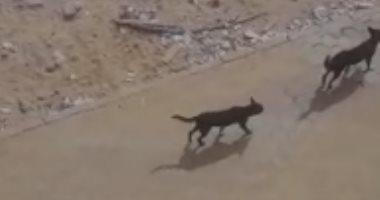 قارئ يشكو انتشار الكلاب الضالة بالحى الرابع فى 6 أكتوبر