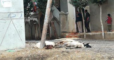 عمود إنارة متهالك يهدد حياة المارة فى قرية دويده بالزقازيق بمحافظة الشرقية
