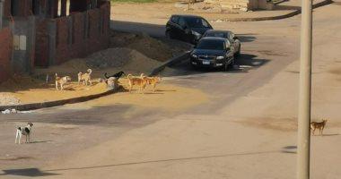 الكلاب الضالة تهدد أهالى عزبة المطار بإمبابة