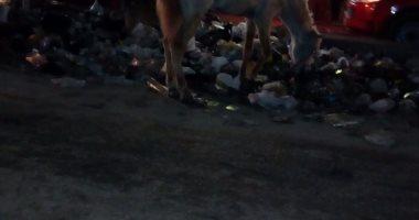شكوى من انتشار القمامة والباعة الجائلين بشارع جمال عبد الناصر بجسر السويس