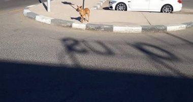 شكوى من انتشار الكلاب الضالة بزهراء المعادى