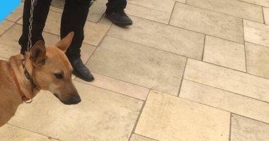 نتيجة بحث الصور عن كلب ضال يعقر طفلة