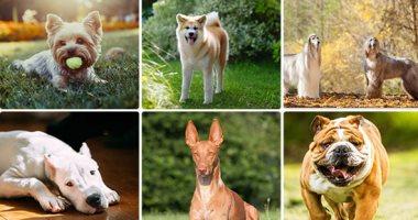 تحصين 2111 كلبا واستخراج 1848 رخصة بمديريات الطب البيطرى خلال 30 يوما