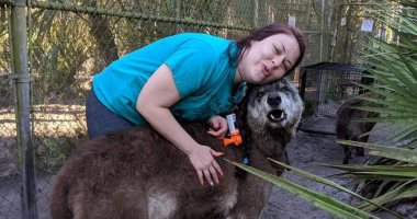 """الذئب العملاق.. اعرف قصة الكلب """"يوكى"""" الأشهر فى أمريكا.. صور"""
