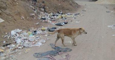 شكوى من انتشار الكلاب الضالة بمنطقة الخمسين جسر السويس تسبب الذعر للأهالى