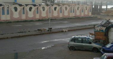 شكوى من انتشار الكلاب الضالة بشوارع مدينة رأس البر