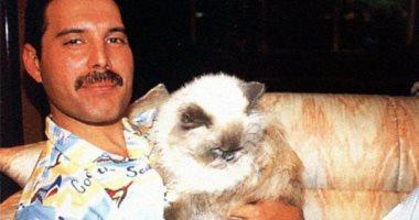 فريدى ميركورى مع قططه