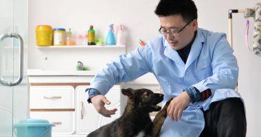 الصين تستنسخ الكلاب البوليسية لتوفير الوقت والمال