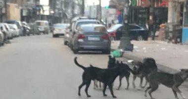 الكلاب الضالة تهدد سكان منطقة النهضة بالسلام.. صور