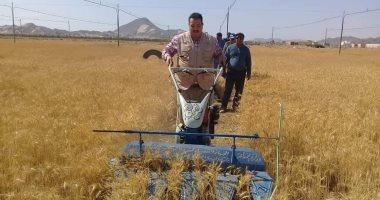 صور... الشلاتين تجنى أول حصاد لزراعة القمح بها بوادى حوضين
