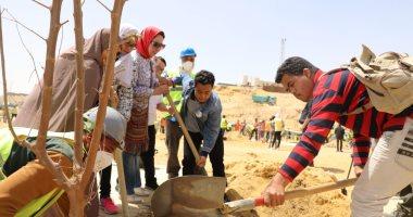  شاهد.. منظمة  العمل الدولية تهدى 100 شجرة للمتحف المصرى الكبير
