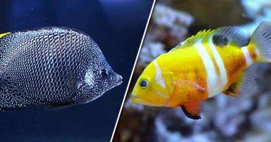 مش كل السمك بلطى. تعرف على أغرب أنواع الأسماك فى عالم البحار