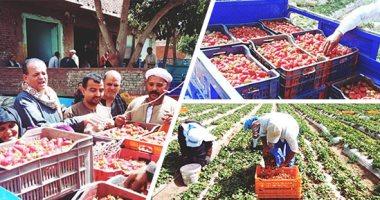 """""""الزراعة"""" تستعين بالمكافحة الحيوية لإنتاج ثمار خالية من المبيدات.. اعرف التفاصيل"""