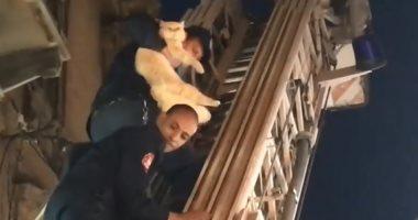 الحماية المدنية بالإسكندرية تنقذ قطة محتجزة فى عقار مهجور.. فيديو
