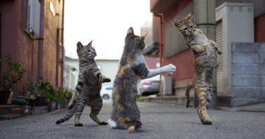 """""""لو مابترقصلكش يبقى إنت السبب"""".. القطط بـ7 أرواح وكمان رقاصة × 40 صورة"""