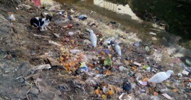 """مواطن يشكو من إلقاء القمامة فى ترعة قرية """"البلاكوس"""" بكوم حماده"""