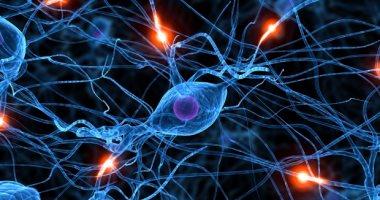 كيف يؤثر فيروس كورونا على دماغ المصابين؟