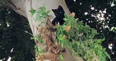 الحماية المدنية تنقذ قطة ظلت عالقة أعلى شجرة لمدة 24 ساعة فى أسيوط.. صور