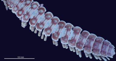 أغرب دراسة على نوع من الديدان تحت الأشعة البنفسجية.. اعرف لقوا ايه